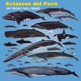 Rompecabeza Especies de Cetáceos